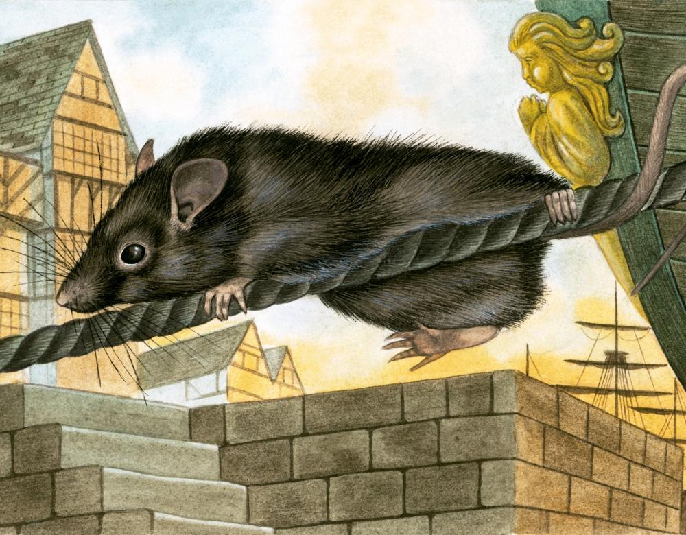 Black rat drawing on a rope