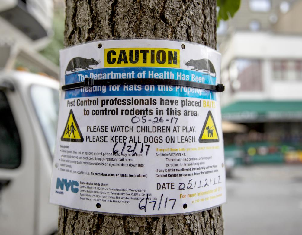 Poster on an English tree informing of a rat extermination
