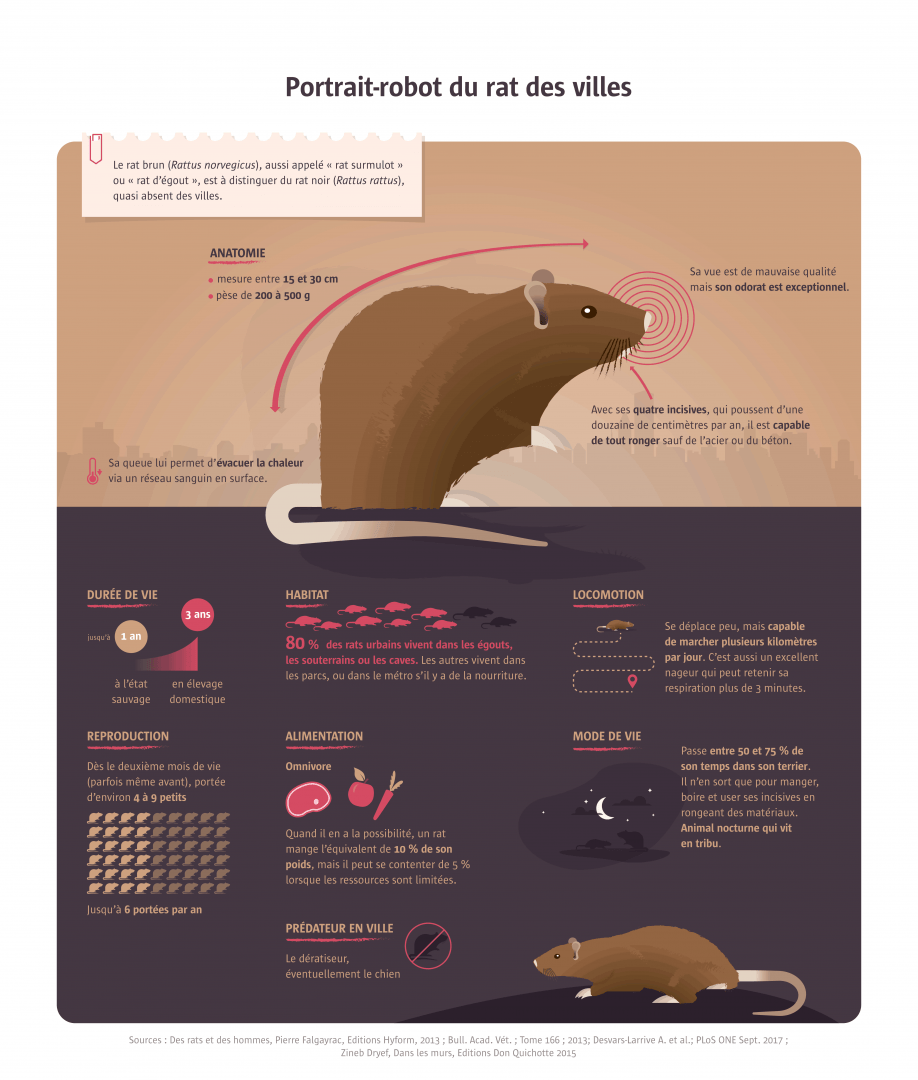 Infographics : robot portrait of the rat of the cities