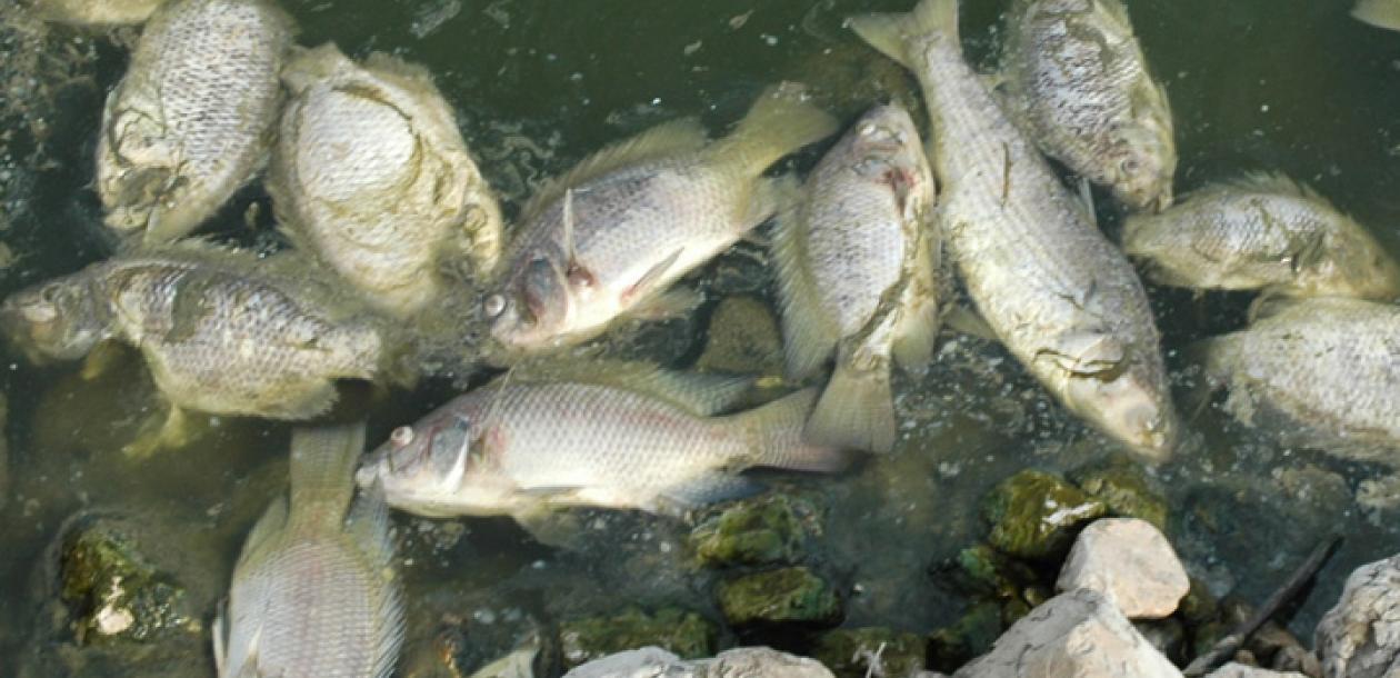 amis de poissons datant