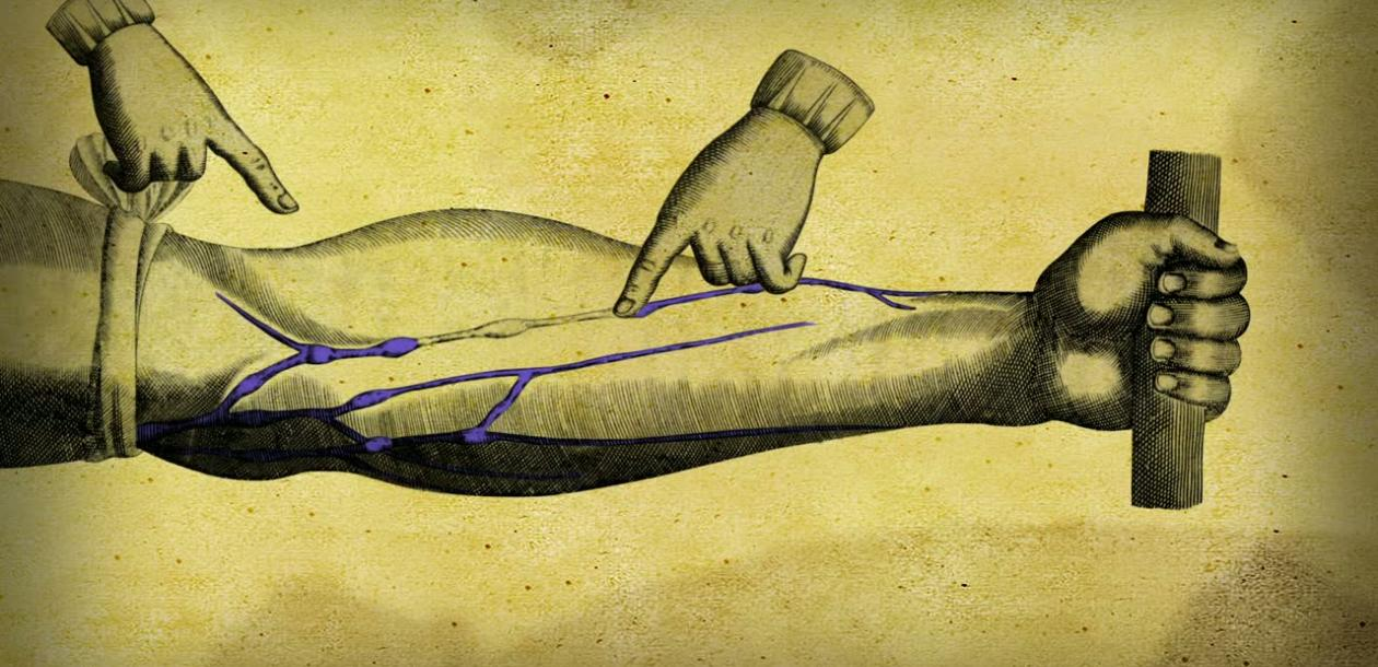 harvey circulation sanguine
