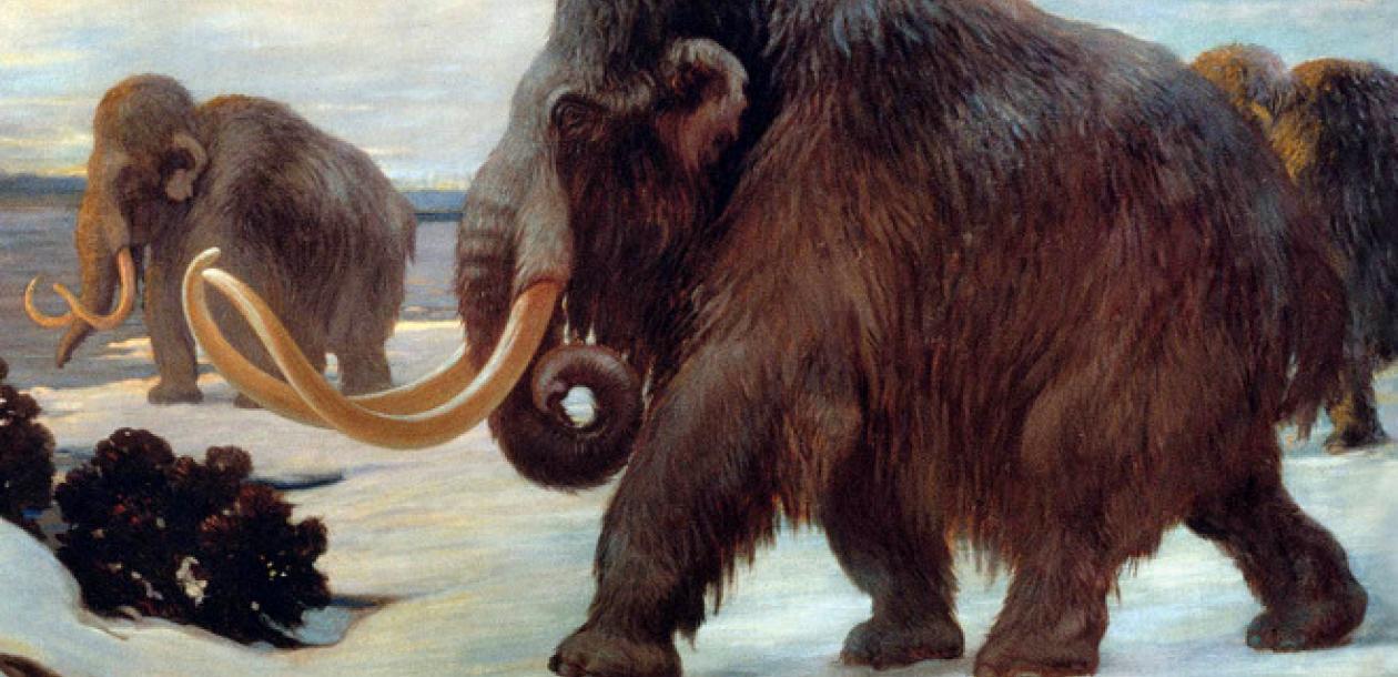 La fin des derniers mammouths enfin expliquée ? | Le blob, l'extra-média