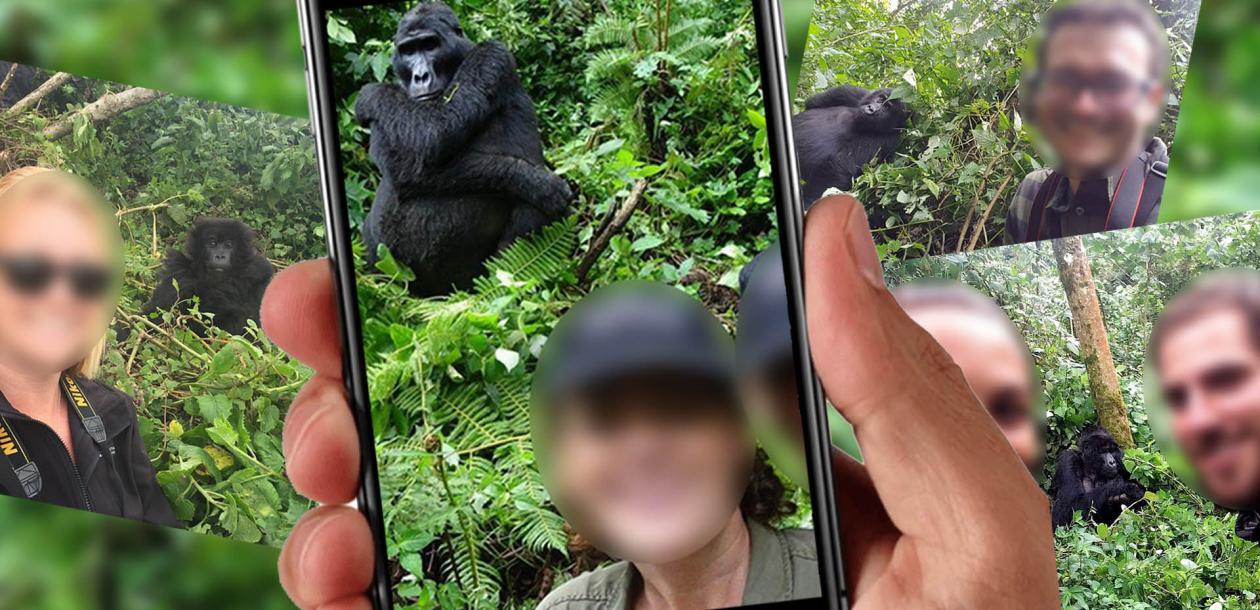 Stop aux selfies avec les gorilles ! | Le blob, l'extra-média