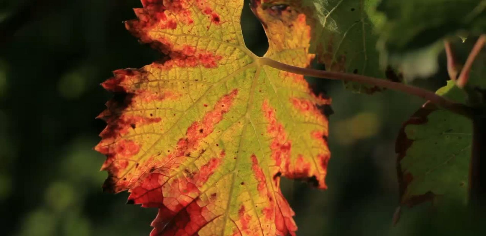 foto de Novembre : les feuilles tombent sous le soleil d'automne | Le blob ...